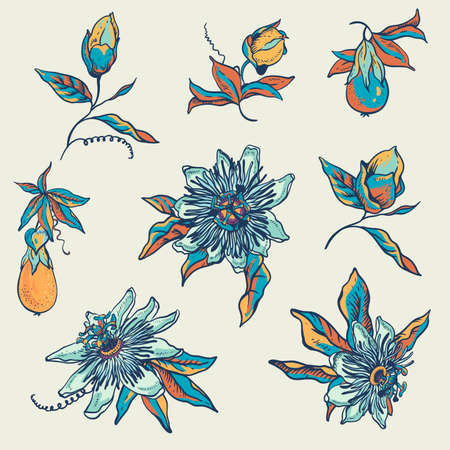 Vintage blue floral natural collection. Passiflora greeting card, flowers, leaves. Hand drawn vector illustration