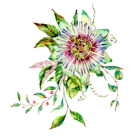 Watercolor Passiflora greeting card, flowers, leaves. Vintage floral natural collection. Set of scrapbook objects for party, wedding, birthday. Hand drawn illustration. Banque d'images