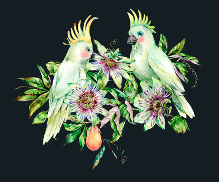 Watercolor Passiflora and white parrot greeting card, flowers, leaves. Vintage tropical summer floral natural collection. Hand drawn bird illustration on black background. Banque d'images