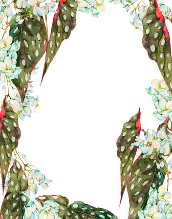 Watercolor vintage floral tropical vertical frame, exotic flowers begonia maculata isolated on white background. Hand painted botanical design collection.