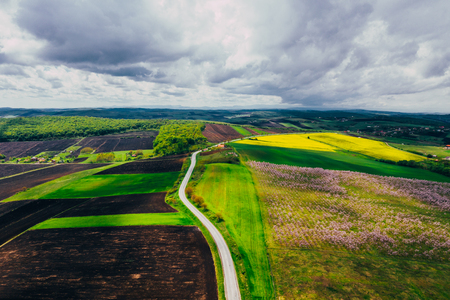 Drone view of wisteria fields 写真素材