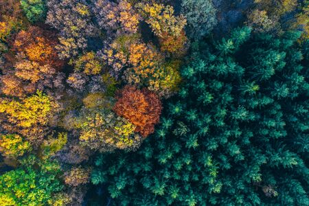 Colorful trees of autumn seen from a drone.