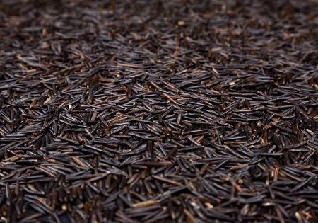 Seeds of wild rice  Shallow depth of field