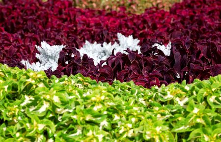Large vivid flower bed in summer in a city park