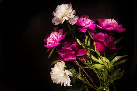 flowers on black backgroung Standard-Bild