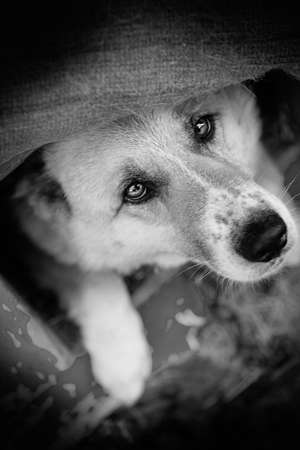 doghouse: Dog in doghouse Stock Photo