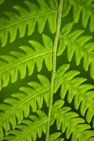 screen savers: Fern leaf in the forest - green nature background - close-up Stock Photo