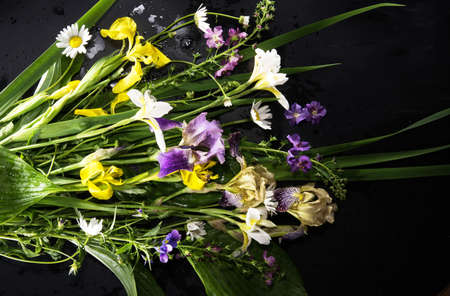 fresh and colorful field flowers on the black background