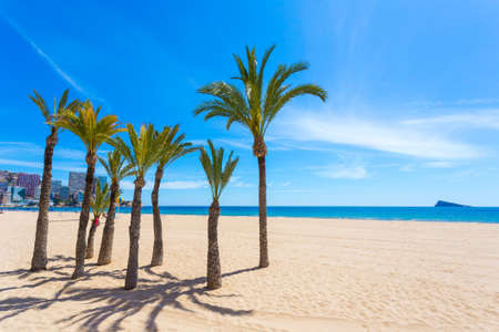palmier: Eight beautiful and green palms trees with a brown trunk on clean white beach against the blue sea and the citys buildings. The sky is clear and blue. Banque d'images