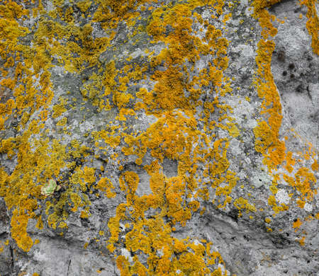 Yellow moss on the stone texture somwhere in mountains
