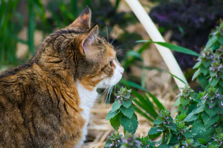 catnip: A cat with catnip