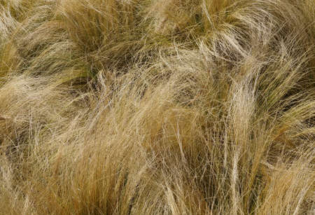 wild grass: Tall wild grass Stock Photo