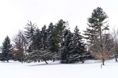druid: Winter trees in Druid Hill Park