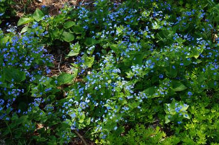 꽃이 만발한 야생화