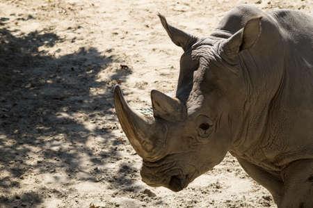 A rhinoceros in a zoo Stok Fotoğraf