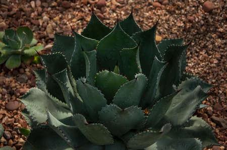 A cactus in a greenhouse