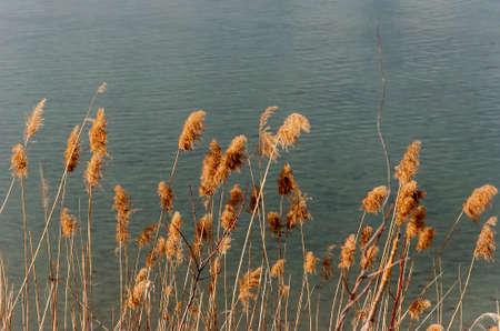 druid: Tall grass in Druid Hill Park