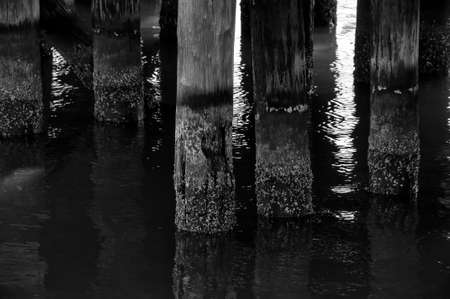 Wood posts in the water