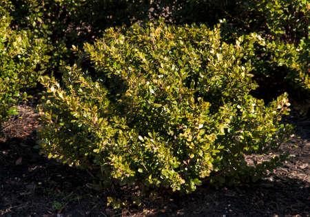 A bush Zdjęcie Seryjne