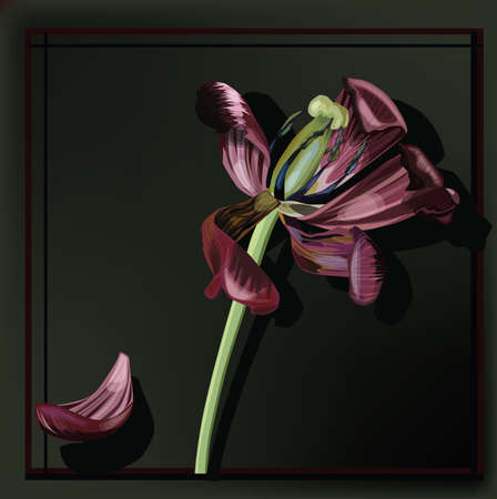 demise: Image of Tulip faded