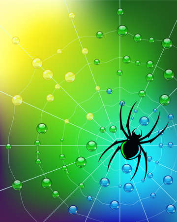 Spider on the web in dew drops. Vector. Illustration