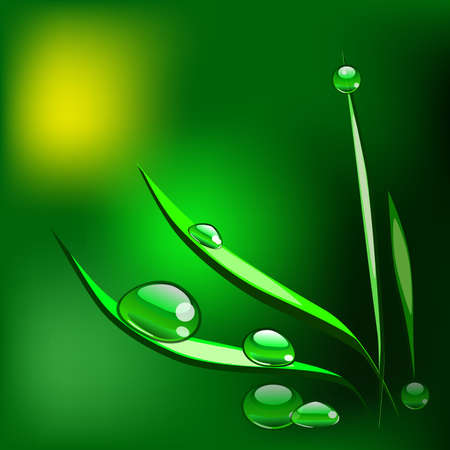 Dew drops on the grass blade. Vector Illustration