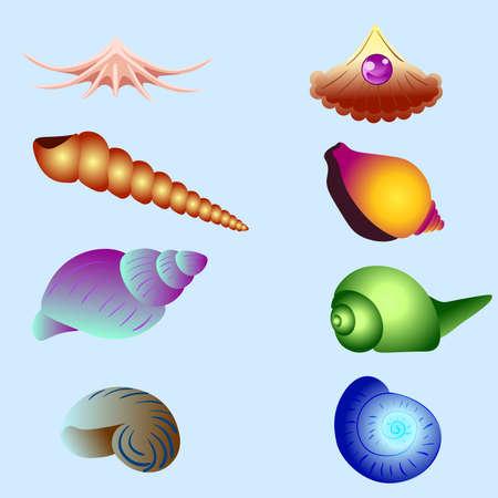 Vector set of sea shells isolated