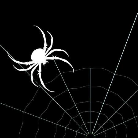 White spider on the black background. Vector silhouette Illustration