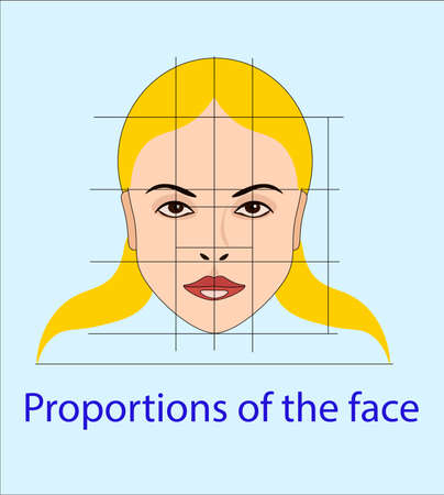 Vector face with lines showing facial proportions for cosmetology and drawing study Illustration