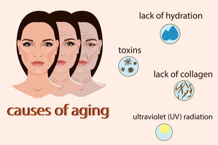Causes of aging. Illustration