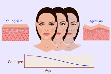 Vector face and two types of skin - aged and young for medical and cosmetological illustrations isolated Vettoriali