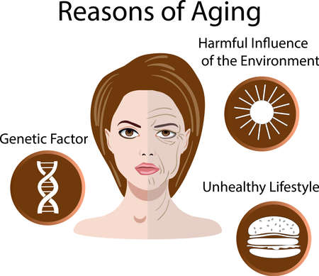 Vector illustration with reasons of aging, isolated 일러스트