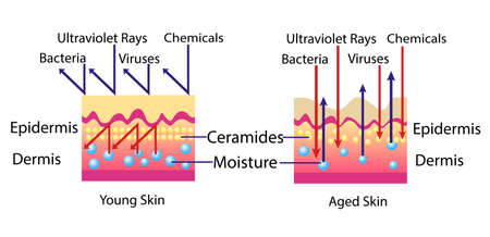 Effect of environment on the skin, vector diagram for cosmetological illustration 版權商用圖片 - 97492800
