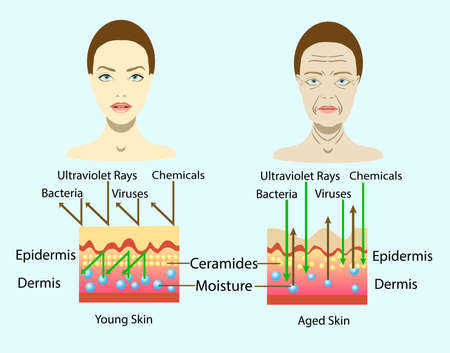 Effect of environment on the skin, vector diagram for cosmetology illustration isolated.