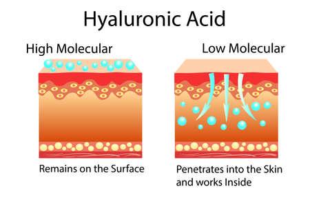 Ilustración de vector con ácido hialurónico en productos para el cuidado de la piel. Bajo molecular y alto molecular.