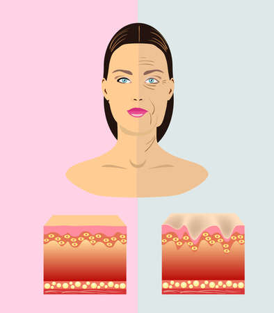 The difference between young and old skin, vector illustration