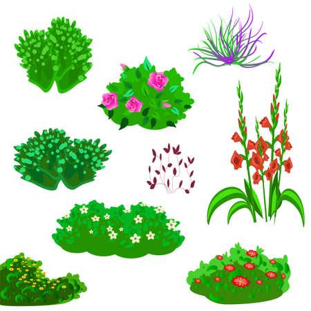 Vecor set of garden plants and flowers Imagens