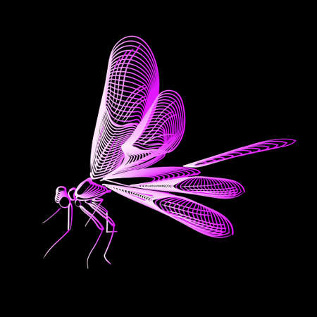 Abstract line art dragonfly, vector illustration isolated
