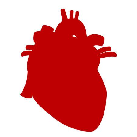 Human heart anatomical vector illustration isolated on white background Ilustração
