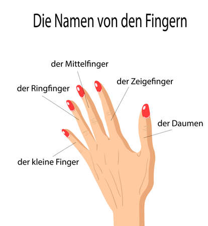 Fingers Names of Human Body Parts in german language, a hand drawn vector cartoon illustration of human fingers and its names. Ilustração