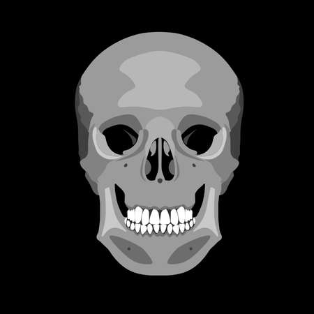 Human skull in profile and in full face. Vector illustration isolated