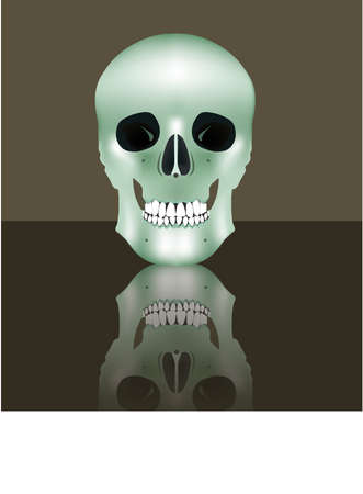 Human realistic skull in full face with reflection. Vector illustration