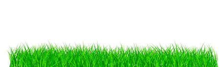 Green juicy grass on a white background - panorama