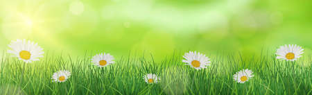 Lush green grass with daisies lit by the sun - Vector illustration