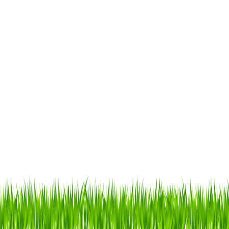 Realistic green meadow grass on white background - Vector illustration Vettoriali