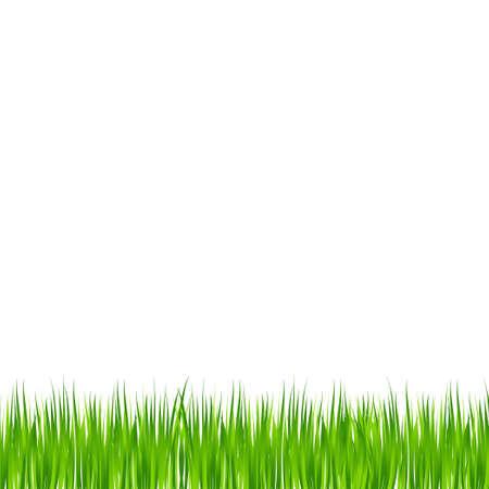 Realistic green meadow grass on white background - Vector illustration Ilustración de vector