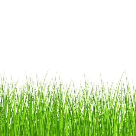 Realistic green meadow grass on white background - Vector illustration