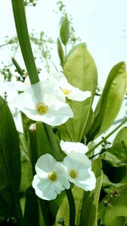 white: White flowers and sunshine
