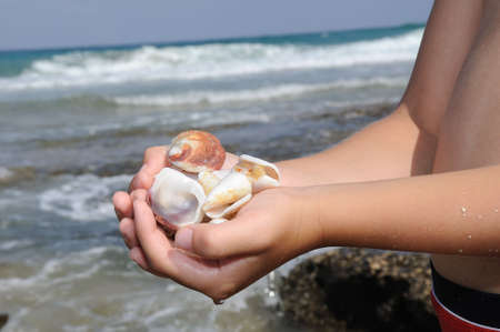hands full of sea shells found the boy on the shore photo