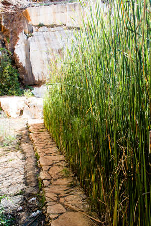 rushes: Reeds and rushes are separated from the stone-paved footpath Stock Photo